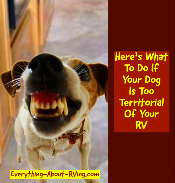 Here's What To Do If Your Dog Is Too Territorial Of Your RV