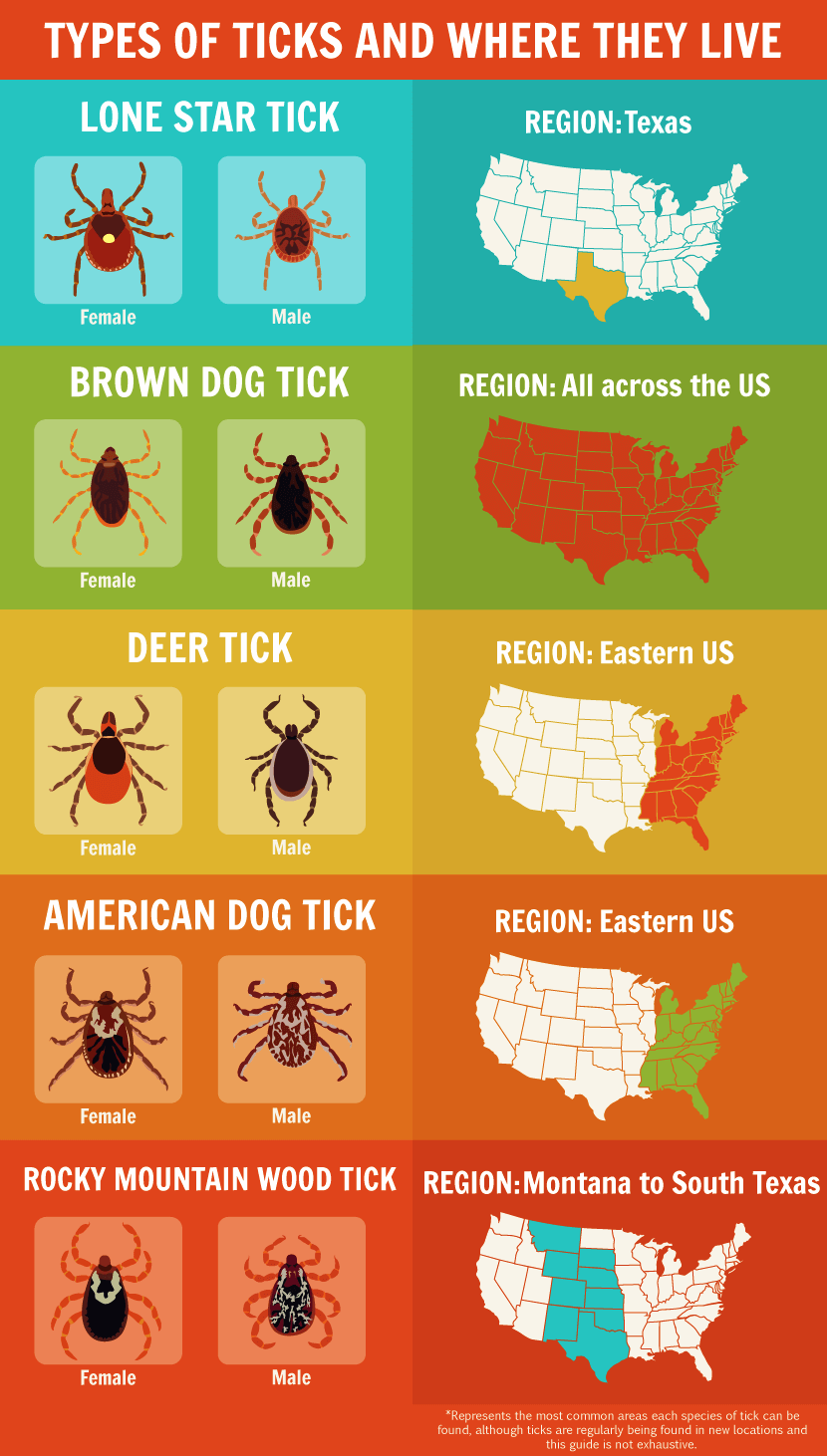 Types of Ticks and Where They Live