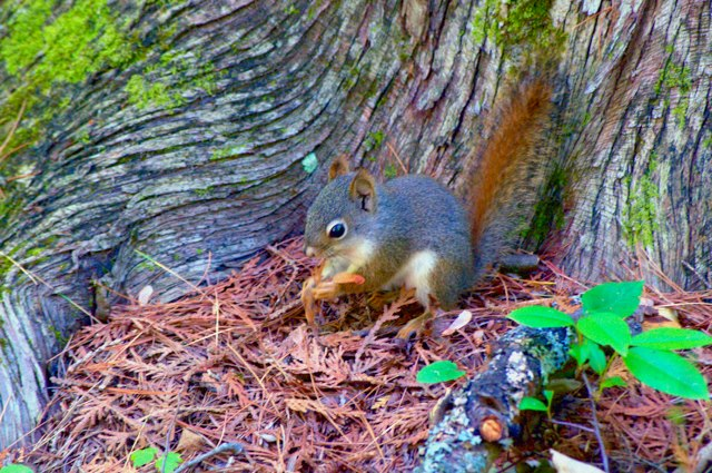 Harrisville State Park nature trail beauty park squirrel