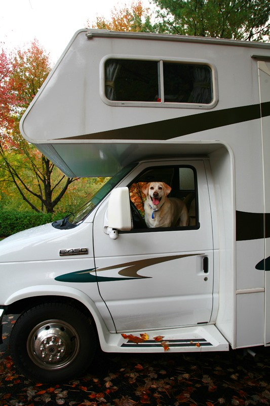 The Hazards of RVing With Your Dog