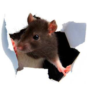 How to Prevent Rats from Damaging Your RV