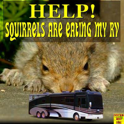 Help, Squirrels are Eating My RV