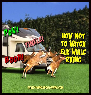How Not To Watch Elk While RVing