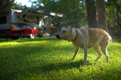 We Love RVing Because We Can Include Our Pets
