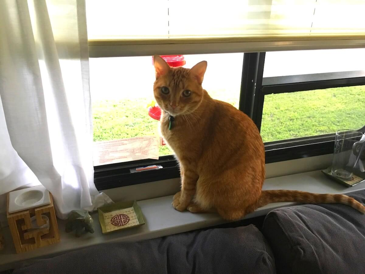 Tips for RVing with Cats