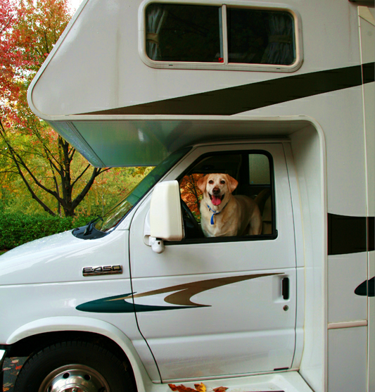 RVing With Dogs, A Day Out With Your Best Furry Friend
