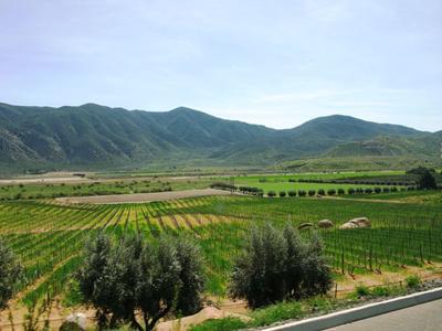Wine Country on Baja