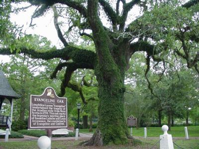 Evangelene Oak